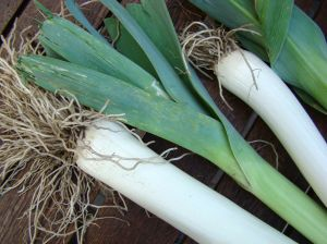 Luscious Leeks: A Little Love Is All They Need