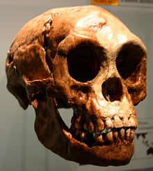 Unravelling the legend behind Homo floresiensis