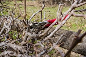 Sharp pruning tips for gardeners in New Plymouth
