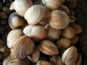 Paralytic Shellfish Toxin Warning Lifted For The Coromandel And Bay Of Plenty