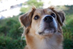 Pets And Parkinson's Study