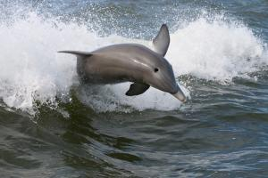 Maui Dolphin situation can't get more urgent