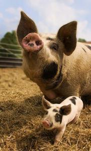 Auckland School Group Suspected Of Having Swine Flu