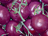 Why purple tomatoes could be healthier choice