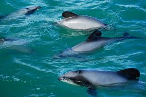 Marine mammal sanctuaries in NZ a joke - Earthrace