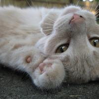 Acute toxoplasmosis impairs memory and concentration