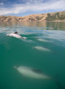 Current dolphin protection 'not good enough'