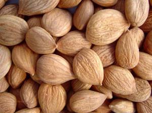 Raw apricot kernels a risk - FSANZ