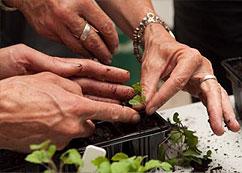 NZ Gardener digs up country's gardening dynamos