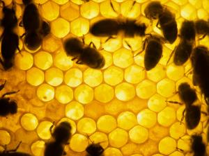 Bees Are Just 500 Grams From A Disaster