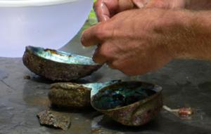 """Paua Plunderer Fined $3500 And Told: """"Hands Off The Shellfish"""""""
