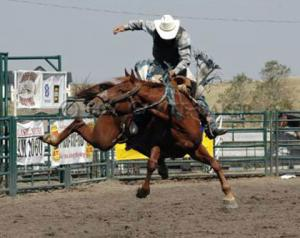 International Rodeo announced for Hamilton