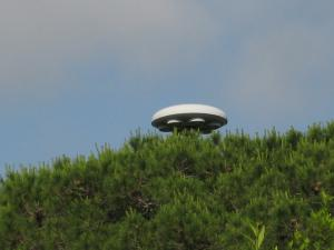 UFO Sighted At Western Park